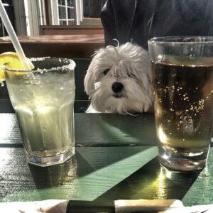 Maltese likes alcohol