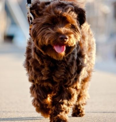 5 ways to know you have a first world dog