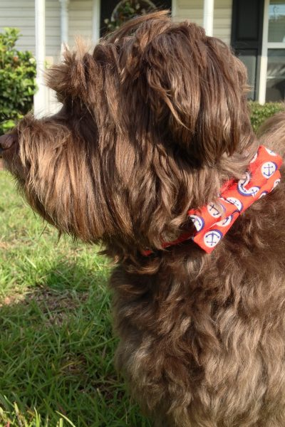 Rover Boutique bow tie dog collar review + giveaway