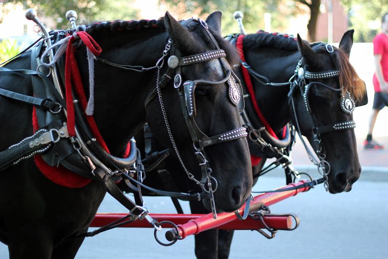 horses in Savannah