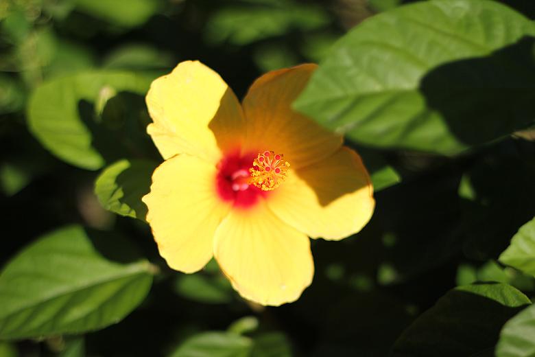 yellow flower in Savannah