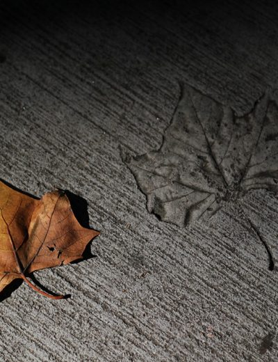 orange oak leaf savannah