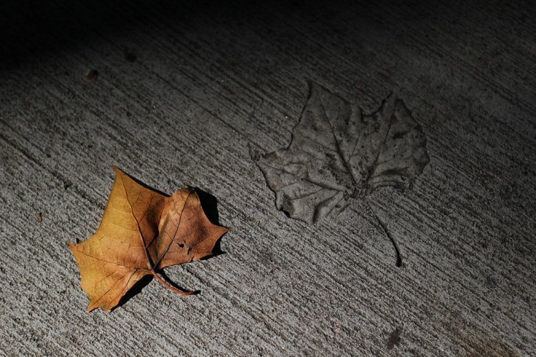 orange oak leaf savannah