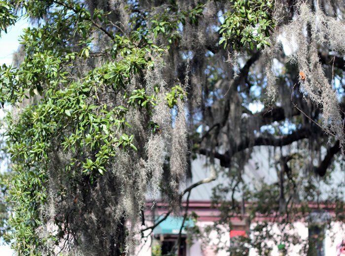 A Stroll Through Savannah