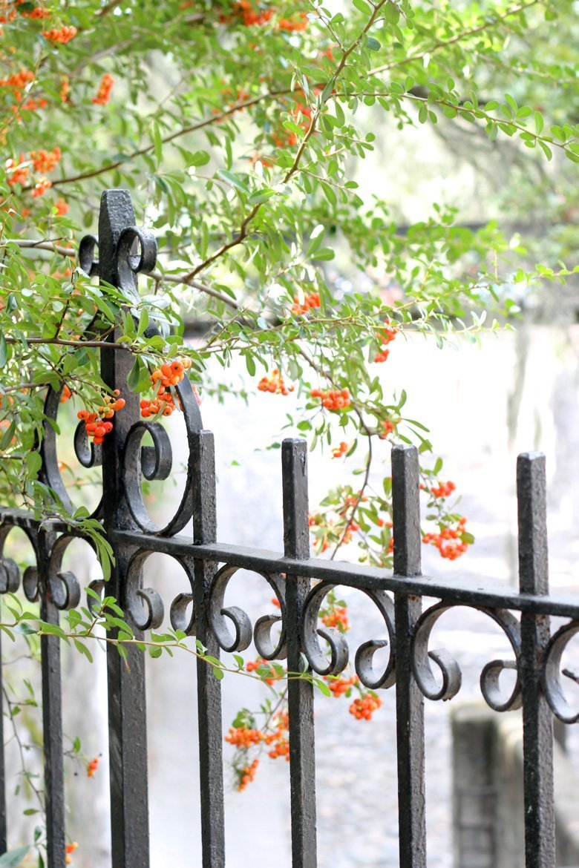 wrought iron fence Bay St Savannah GA