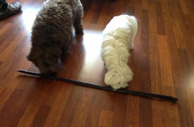 3 foot dog jerky