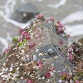 Edisto Island jetty barnacles