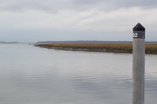 edisto marsh
