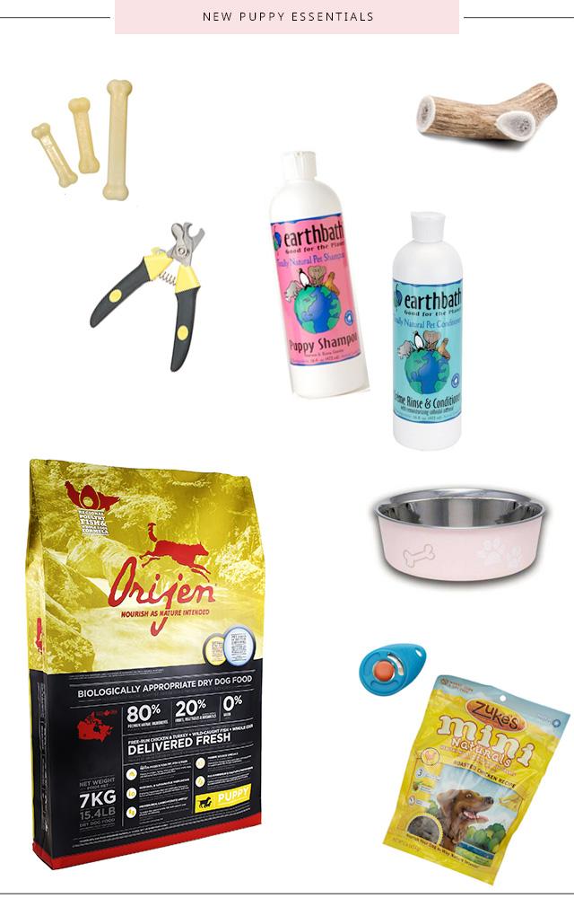 Essentials When Bringing Home a New Dog or Puppy | La La Lisette
