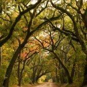 Drive to Botany Bay - Edisto Island #edisto #botanybay #southcarolina
