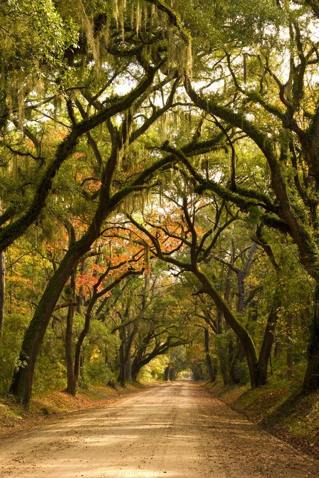 Botany Bay – Edisto Island part 2