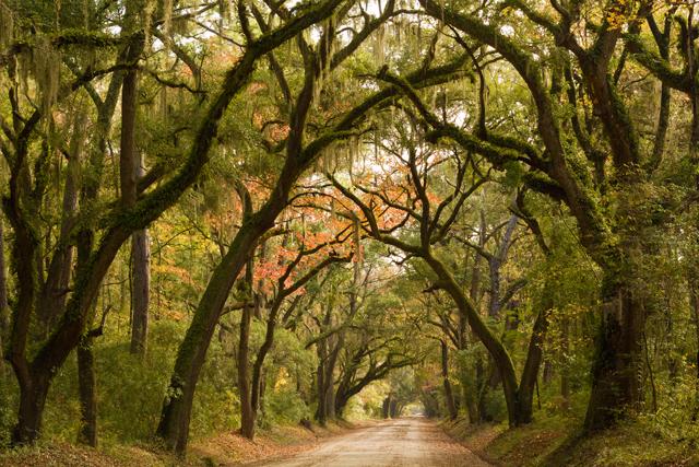Drive to Botany Bay - Edisto-Island-part 2 #edisto #southcarolina