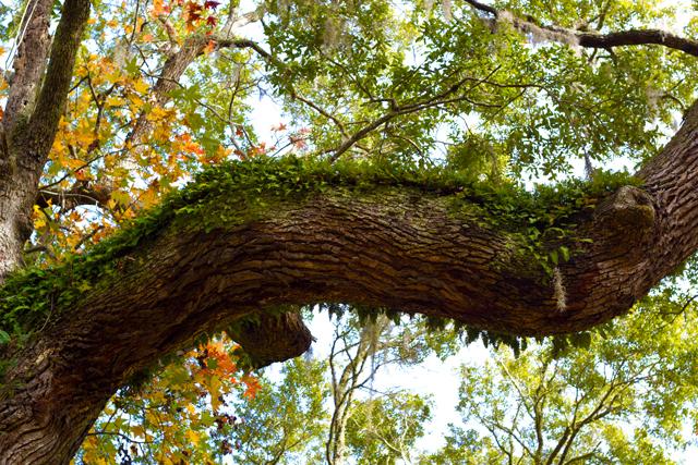 Botany-Bay mossy tree branch - Edisto Island #edisto #southcarolina