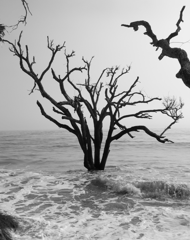 Tree at Botany Bay #edisto #southcarolina