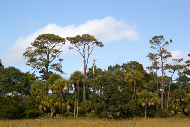 Salt Marsh, Botany Bay, Edisto Island #edisto #southcarolina