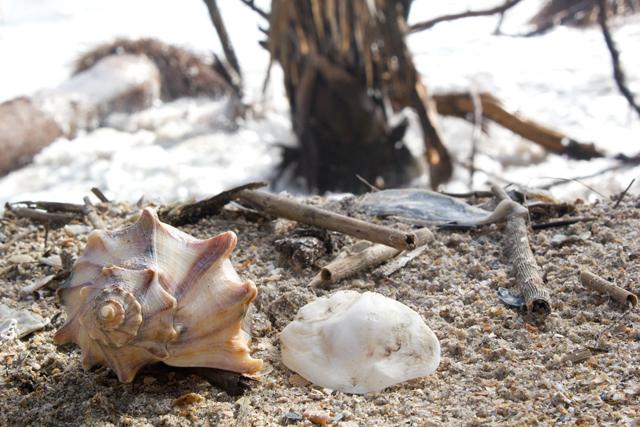 Shells at Botany Bay - Edisto Island #edisto #southcarolina