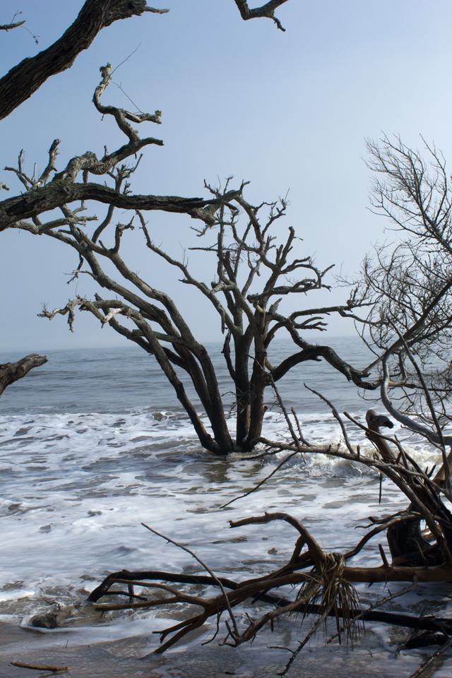 Tree at Botany Bay - Edisto-Island #edisto #southcarolina