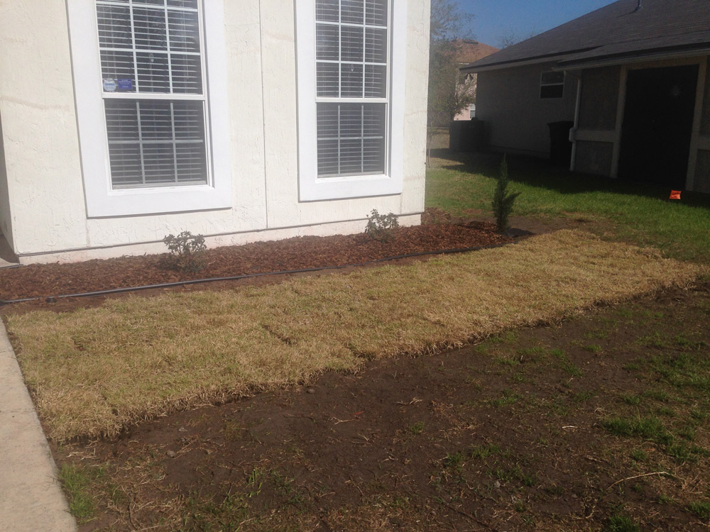 dormant zoysia sod installed