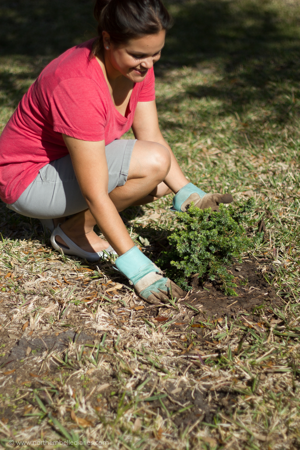 Planting ground cover #LoveYourLawn #ad