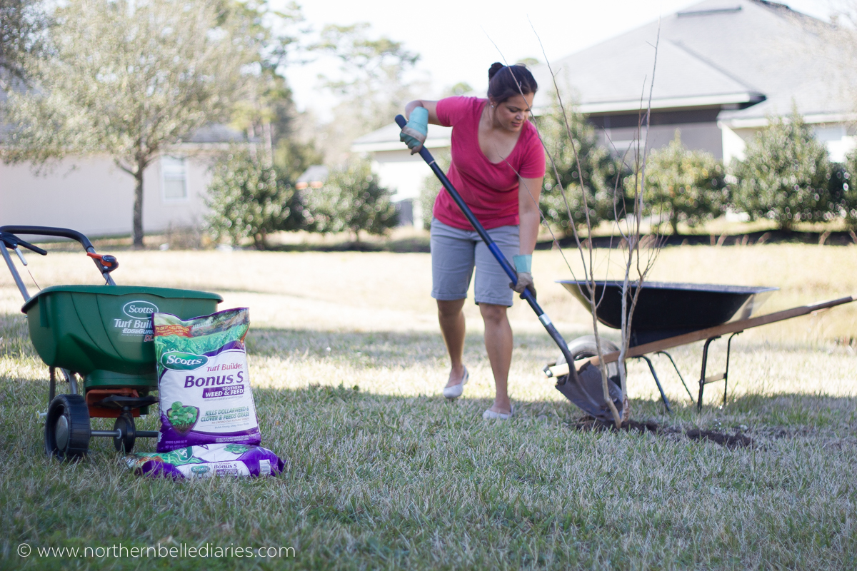 Transplanting tonto crepe myrtle #LoveYourLawn #ad