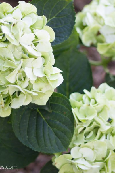 7 Early Spring Gardening Care & Maintenance Tips