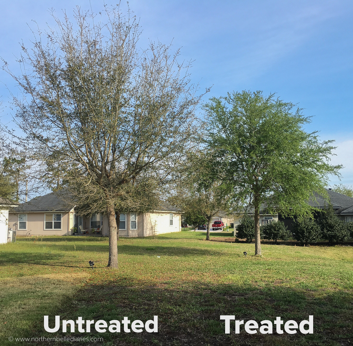 Bayer Tree and Shrub before and after