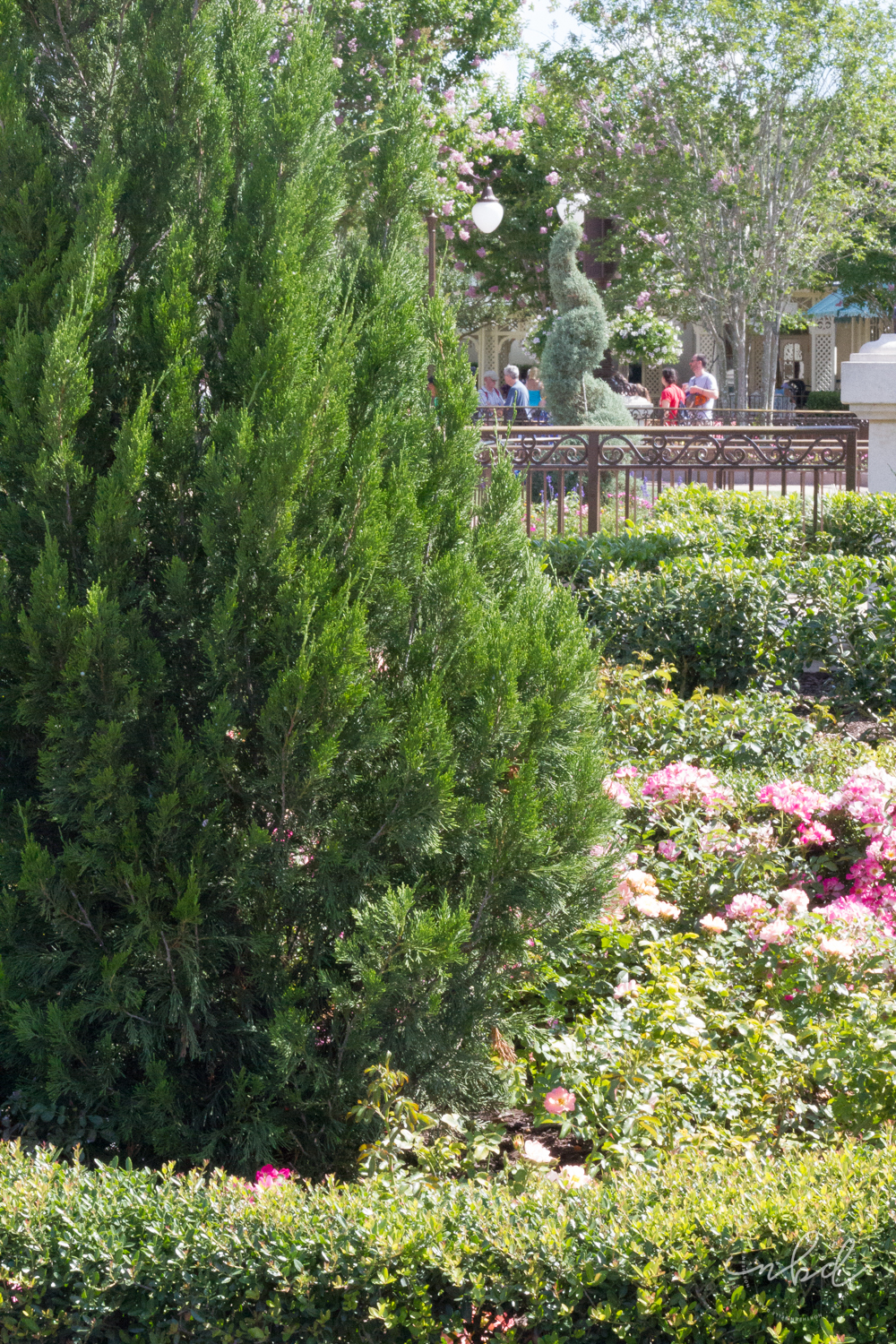 Magic Kingdom Magic Kingdom landscaping
