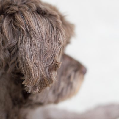 Wisdom Panel dog DNA kit mutt muzzle