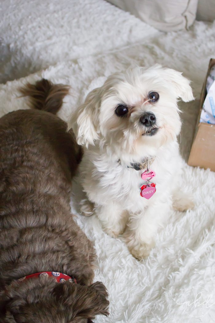 BarkBox   The Ultimate Dog Subscription Box