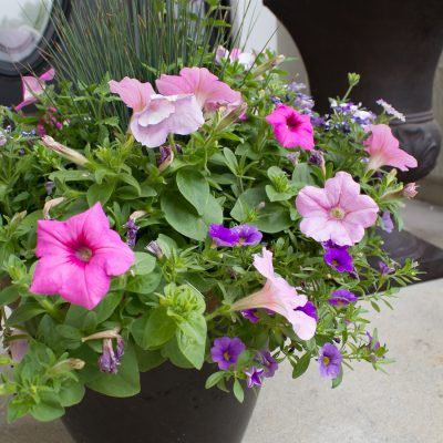 Choosing the right plants - How to Create a Beautiful Planter