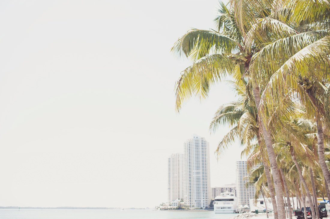 palm-trees-and-downtown-port
