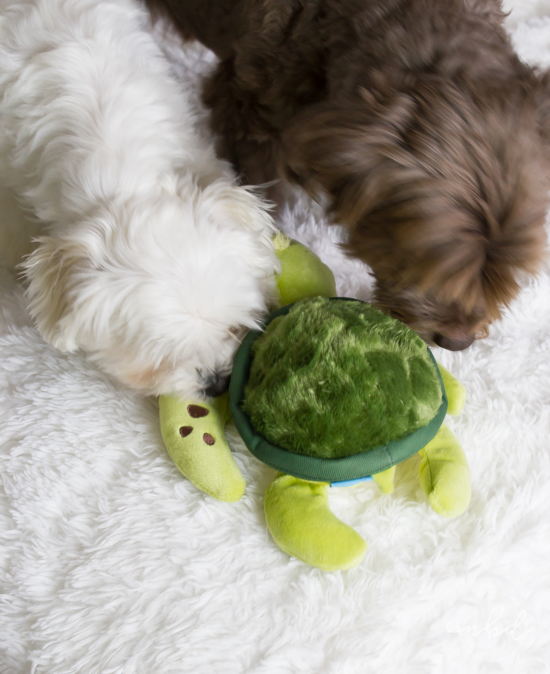Bark Destroyers Club | The Perfect Toys for Ferocious(ly cute) Pups