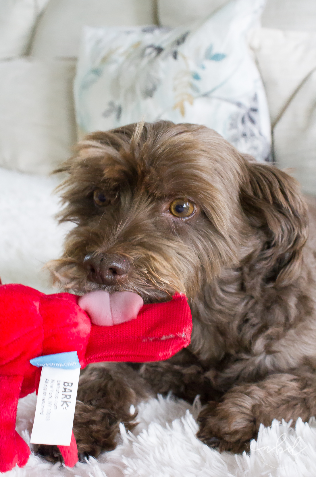 The Perfect Toys for Ferocious(ly cute) Pups | Chip and Bark Destroyers Club Larry the Lobster