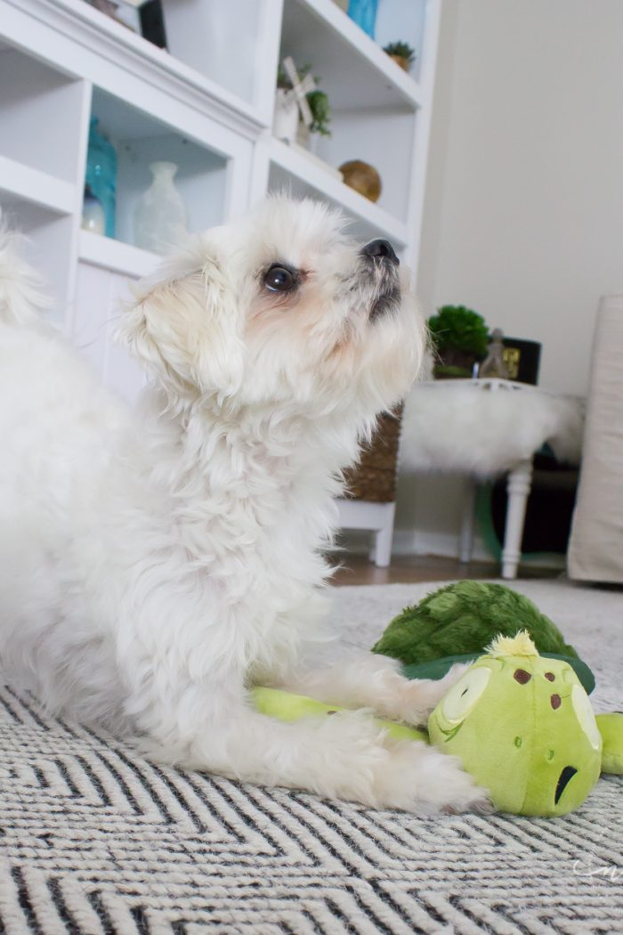 The Perfect Toys for Ferocious(ly cute) Pups