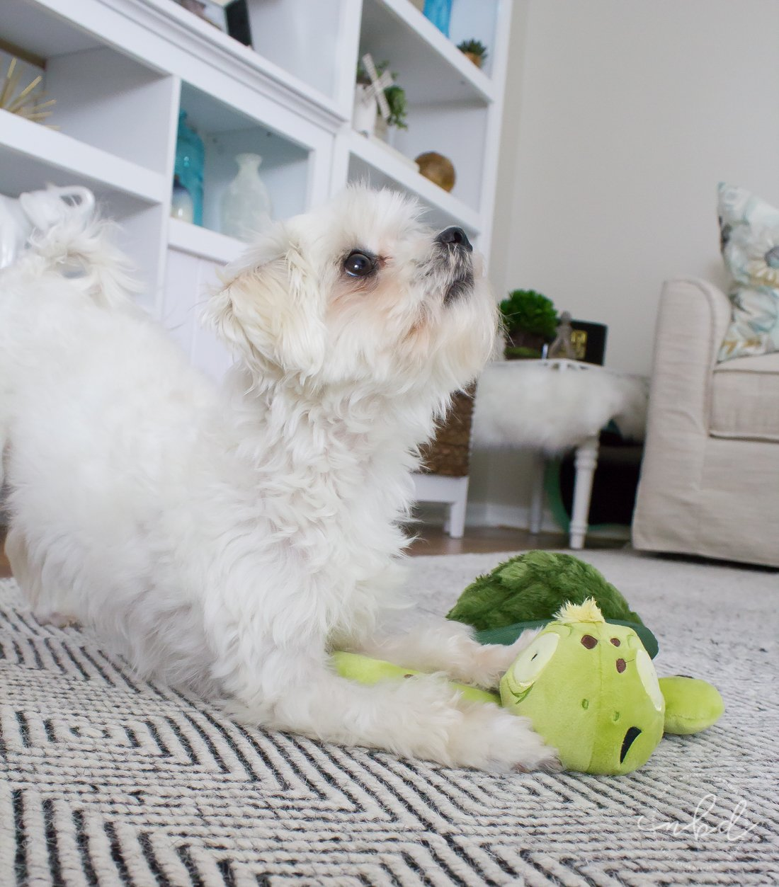 The Perfect Toys for Ferocious(ly cute) Pups | Daisy