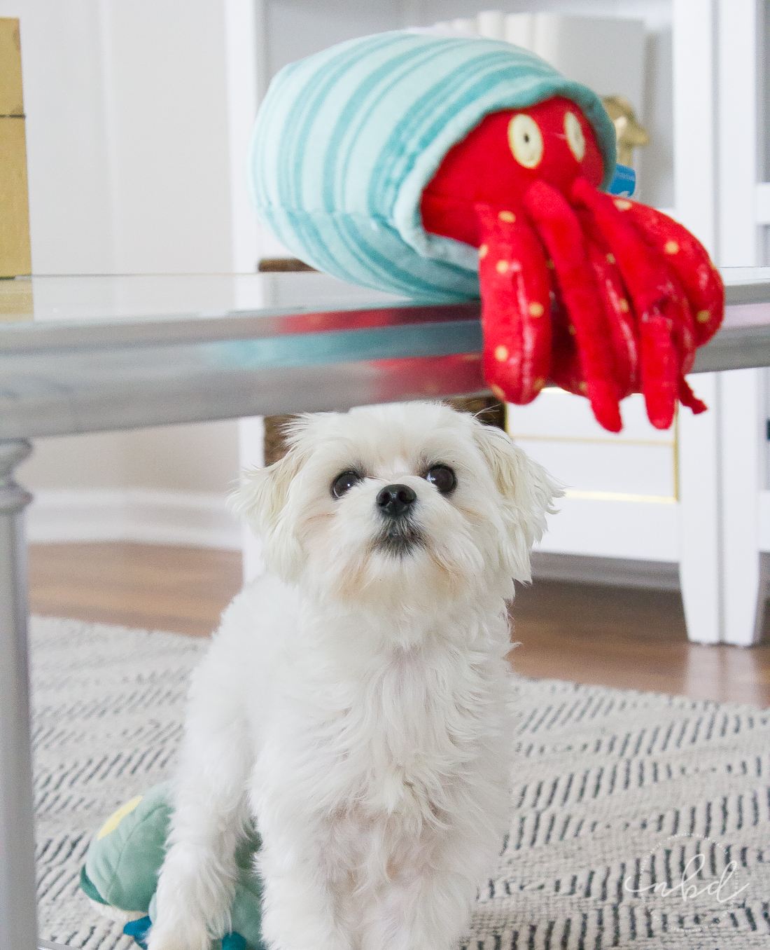 Daisy and Bark Destroyers Club Homer the Crab  | The Perfect Toys for Ferocious(ly cute) Pups