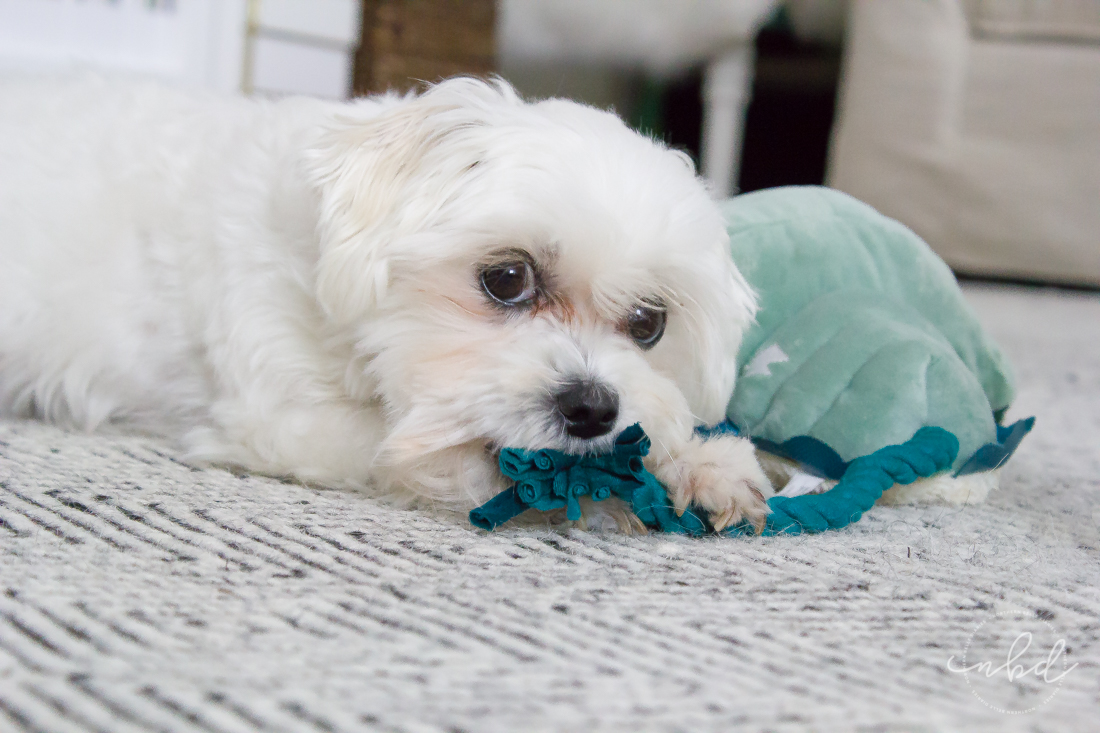 The Perfect Toys for Ferocious(ly cute) Pups | Daisy is a shredder