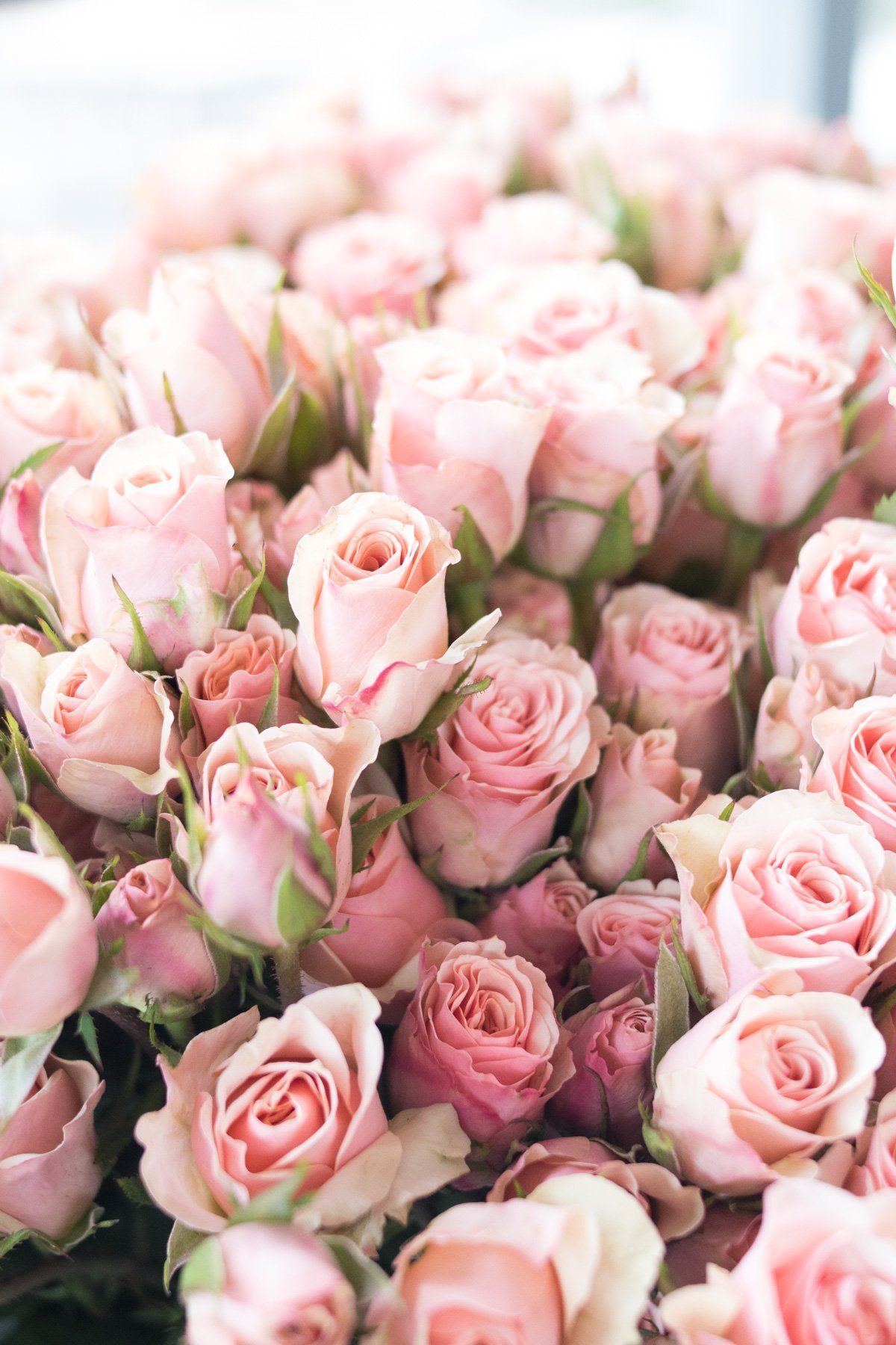 pink spray roses from Alice's Table in Jacksonville Beach