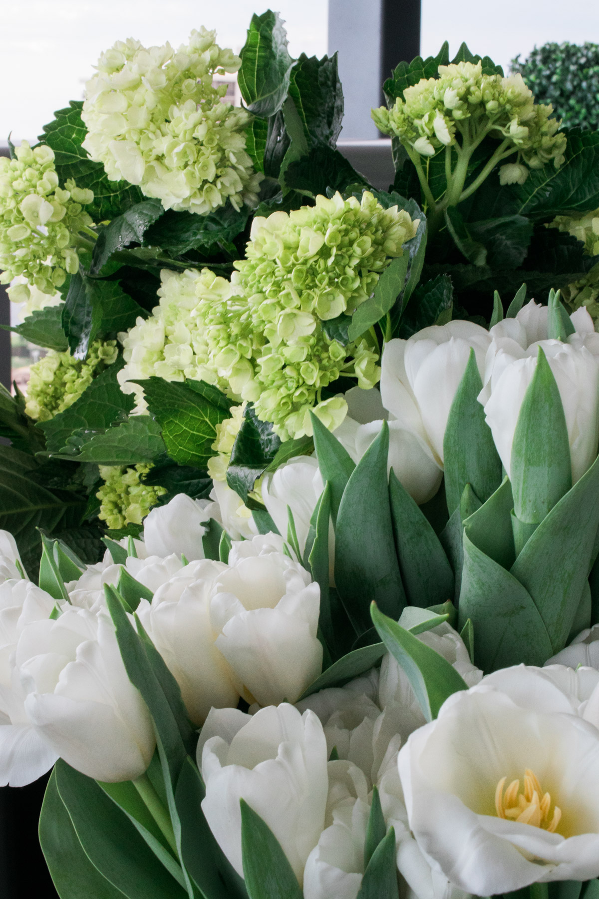 green hydrangeas and white tulips