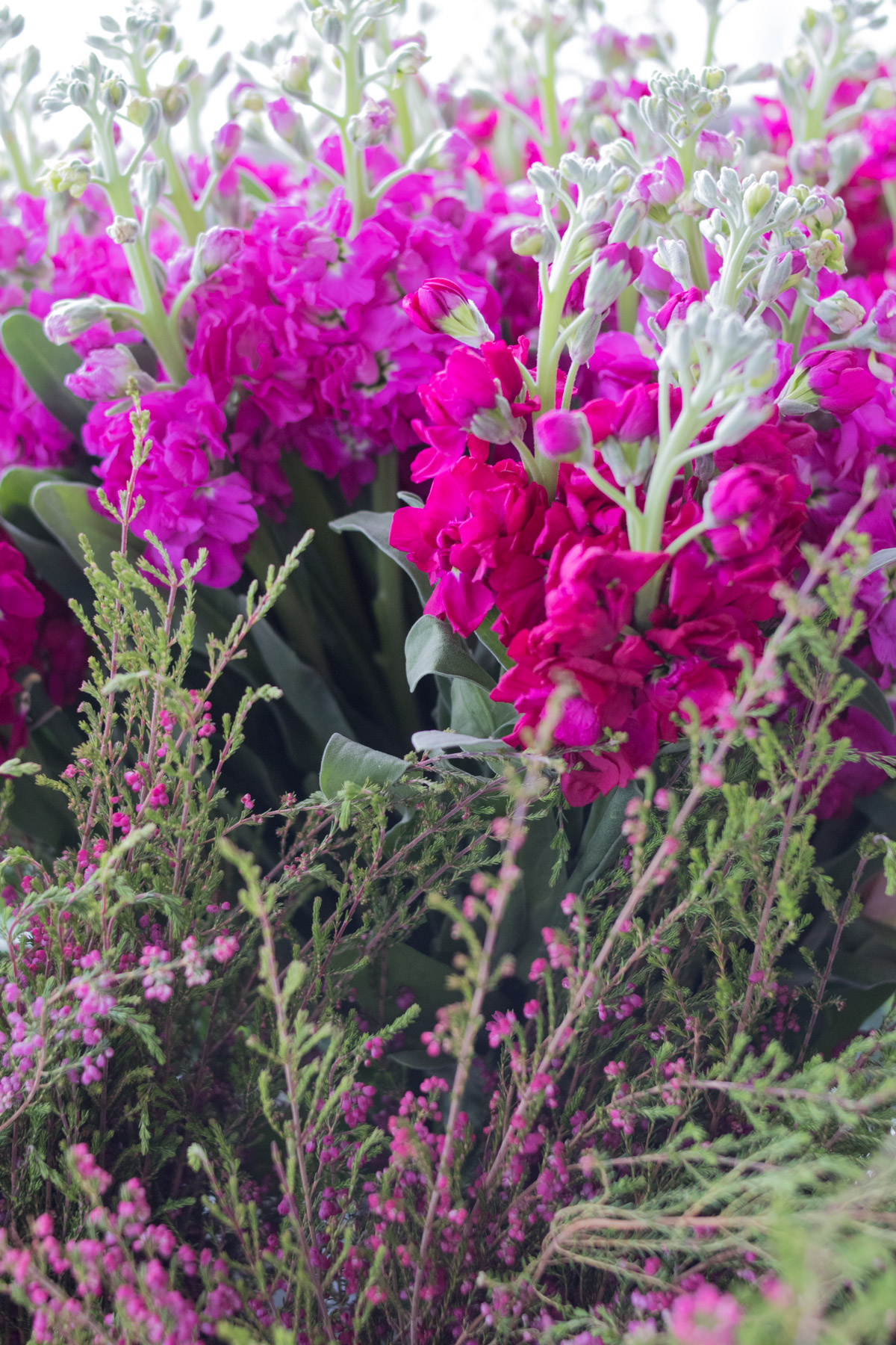 pink heather and stock flowers